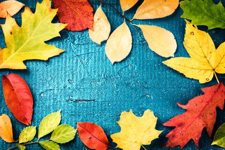 Autumn frame with various colorful fall leaves over blue wooden background. Fall background with copy space