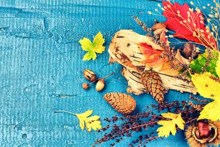 Autumn still life with colorful fall leaves and forest plants over blue wooden background. Fall nature background