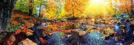 森林ストリームの晴れた秋の日にあるパノラマの秋の風景。秋、自然の背景