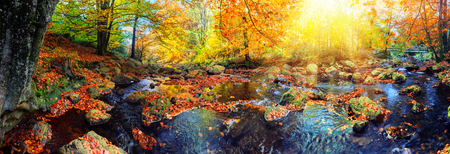 Panoramic autumn landscape with forest stream on sunny fall day. Fall nature background