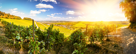 Panoramic landscape with autumn vineyards. Mosel, Germany Stock Photo