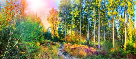 Panorámica paisaje de otoño con el camino de bosque. Fondo de la caída naturaleza