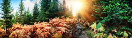 Panoramic autumn landscape with forest path. Fall nature background