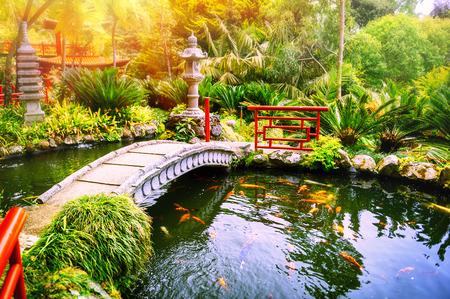연못에서 수영 코이 물고기와 일본 정원입니다. 자연 배경