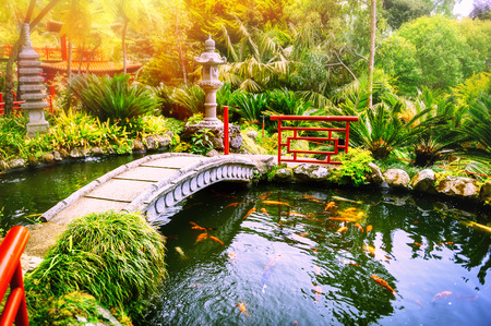 Japanse tuin met het zwemmen koi vissen in vijver. Natuur achtergrond
