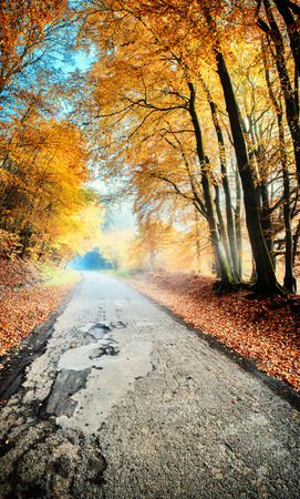 landscape nature: Autumn landscape with country road in orange tone. Nature background Stock Photo