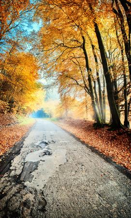 Autumn landscape with country road in orange tone. Nature background Foto de archivo