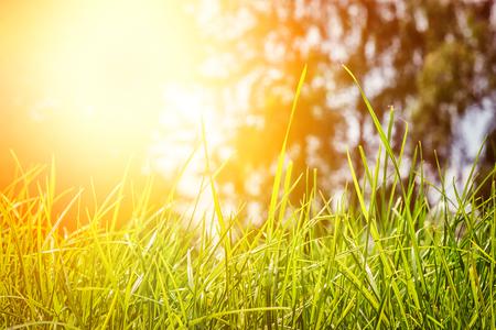 landschaft: Sommerlandschaft mit grünem Gras am sonnigen Tag. Natur Hintergrund
