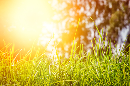 Summer landscape with green grass at sunny day. Nature background Imagens
