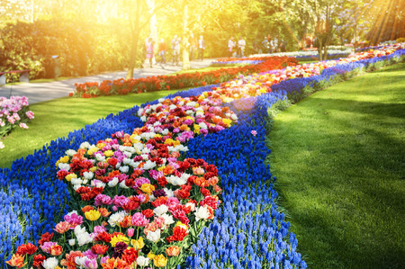 Spring landscape with multicolor flowers in park. Nature background
