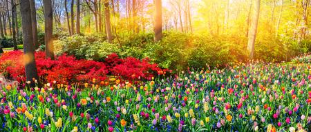 공원에서 여러 가지 빛깔의 봄 꽃 파노라마 풍경. 자연 배경