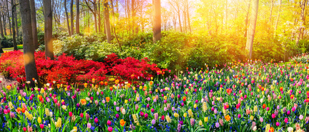 Panoramic landscape with multicolor spring flowers in park. Nature background