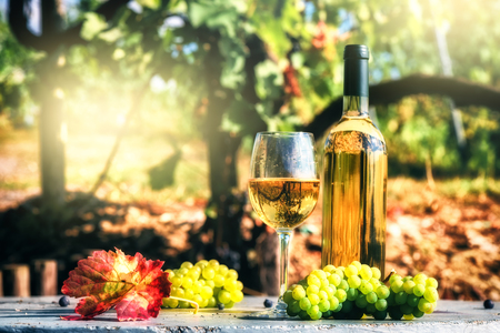 Bottle and full glass of white wine over vineyard background. Wine tasting and gastronomy concept Stock Photo