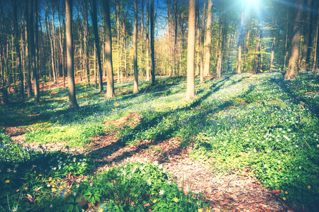 Spring landscape with forest path covered by seasonal flowers. Nature background