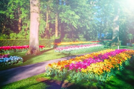 Beautiful spring landscape with multicolor tulips. Nature background Stock Photo