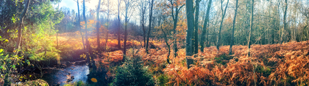 Panoramic autumn landscape with forest stream. Fall nature background Stok Fotoğraf