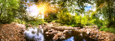 Panoramic summer landscape with forest stream. Nature background
