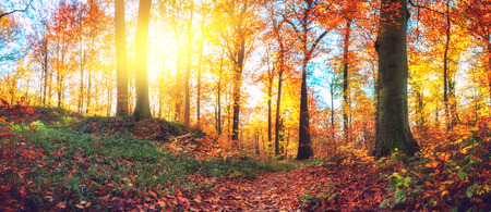 Panoramic autumn forest landscape. Fall nature background Stock Photo