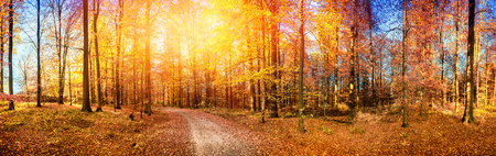 Fall landscape with forest road in orange tones. Nature background Stock Photo