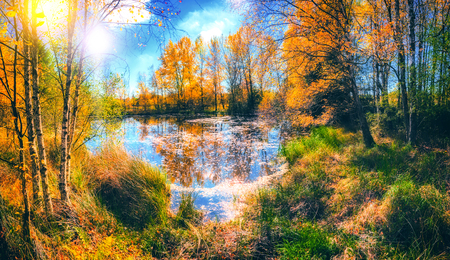 Autumn landscape with forest lake on sunny fall day. Fall nature background