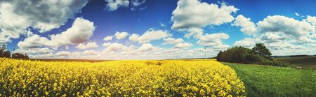 Panoramic summer landscape with rapeseed field. Agricultural background Stok Fotoğraf