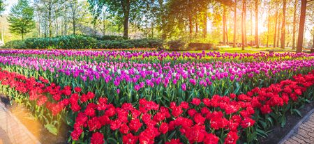 Beautiful spring park with multicolor flowers. Nature background