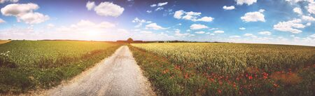 Panoramic summer landscape with country road and poppy flowers. Nature background