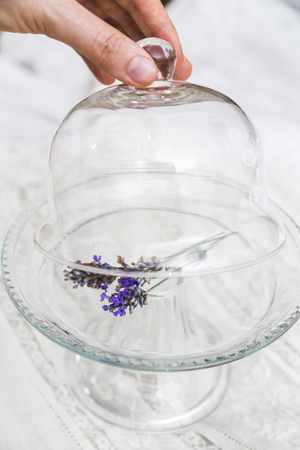Female fingers open glass tray cup with lavender