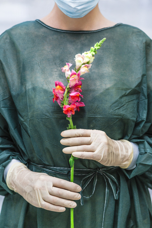 Female doctor or nurse with snapdragons flower in hands 版權商用圖片