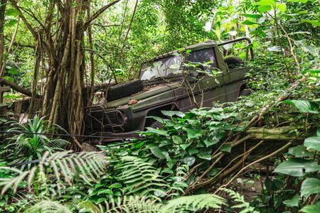 Old military broken jeep in jungle hit tree