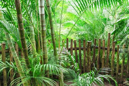 Homemade wooden fence from boards in green jungle