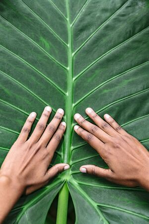 African-american woman hands isolated on green background from big palm leaf Stok Fotoğraf