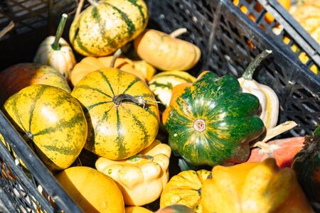 Colorful pumpkins in plastic box on farmer market Stok Fotoğraf