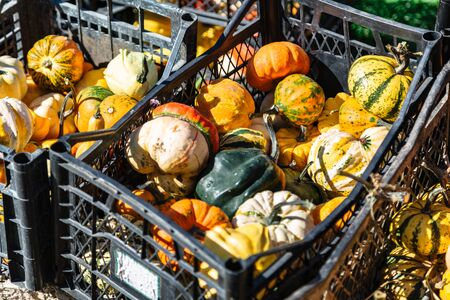 Pumpkins lie in crates for sale at farmers market