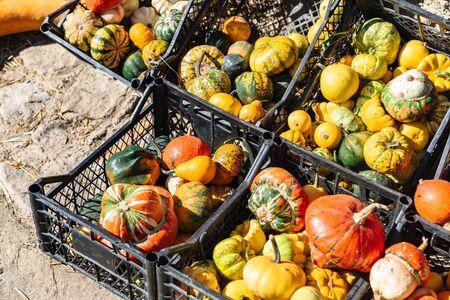 Pumpkins for sale in crates in farmer fall market Stok Fotoğraf