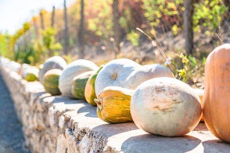 Colorful pumpkins lying on outdoor farmer market