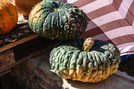Green pumpkin lying on stone in autumn sunny day Stok Fotoğraf