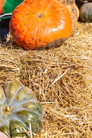 Two big pumpkins lying on golden hay close up