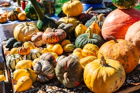 Many various and big colorful pumpkins background
