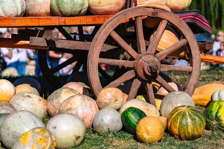 Cart with different pumpkins on holiday outdoor