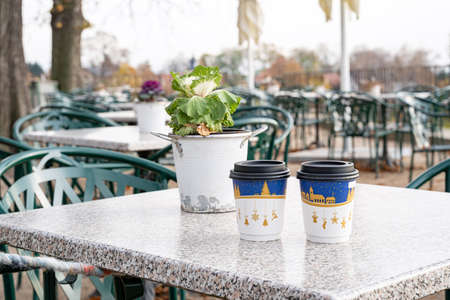 Green houseplant in bucket and two recyclable paper coffee cups with christmas print standing on table on outdoor terrace of cafe or restaurant on autumn November day. Drink, leisure activity, seasons
