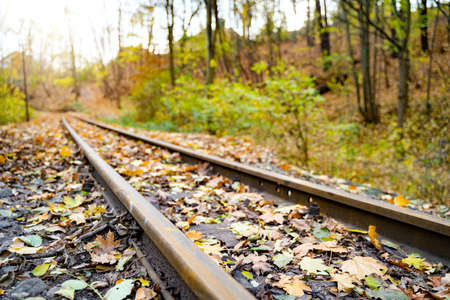 Old rusty railway tracks stretching into the distance among orange and yellow leaves in autumn October or November forest on calm day at sunset. Nature, season specific, transportation, cargo industry Zdjęcie Seryjne