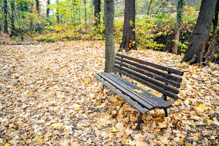 Wooden brown street bench stands among yellow and orange leaves in an autumn quiet calm forest or park on an October or November day. Nature, season specific, furniture, environment, leisure activity