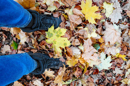 Young man in jeans and sports trekking waterproof boots stands in dense maple foliage leaves in the forest on autumn september or october day. Nature, season specific, outdoor active leisure activity