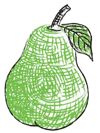 A hand drawn illustration of a pear