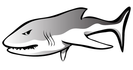gills: This is a hungry and angry shark illustration  Illustration