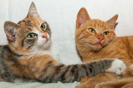 Two curious and focused young kittens