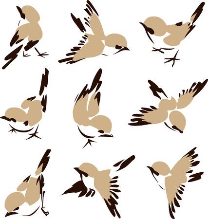 aves caricatura: Ilustraci�n de aves poco  Vectores