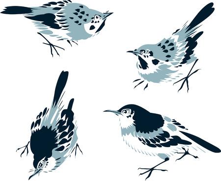 sparrows: bird illustration