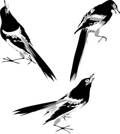 black and white bird illustration Vector